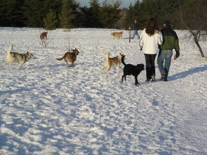 800px-Dogs_and_people_in_snowy_dog_park