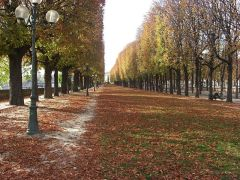 800px-Alley_along_the_Seine_Cours_Albert_1er