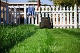 cutgrass