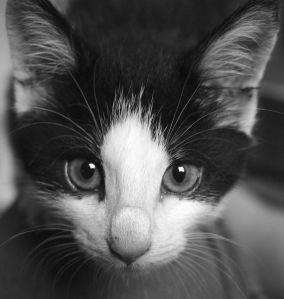 cat sniffs